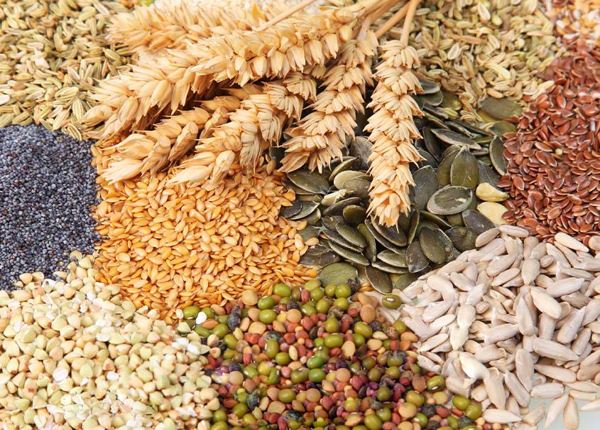 Conheça os benefícios dos grãos e sementes para sua dieta.